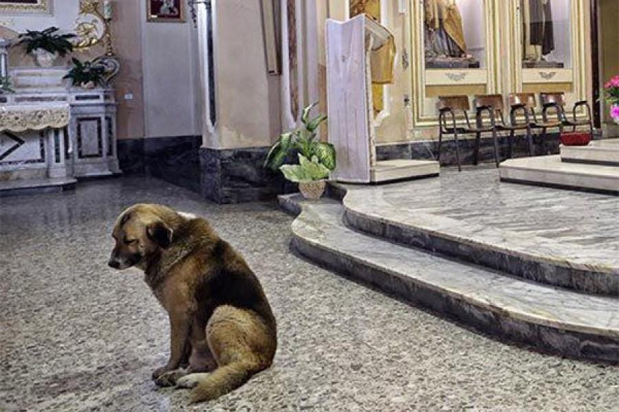 Szívszaggató: A kutya minden egyes nap bemegy a templomba: nyugodtan várja elhunyt gazdáját