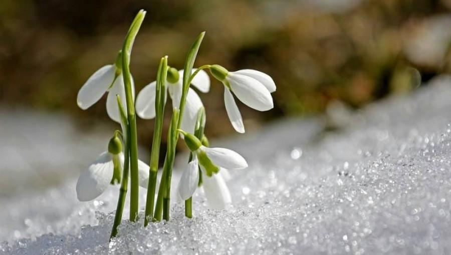 Legfrissebb előrejelzés: Komoly felmelegedés várható, ekkor érkezik a tavasz
