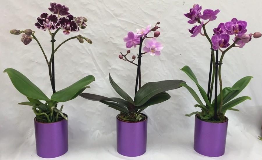 Tedd ezt az elszáradt orchideáddal és garantáltan újra virágozni fog
