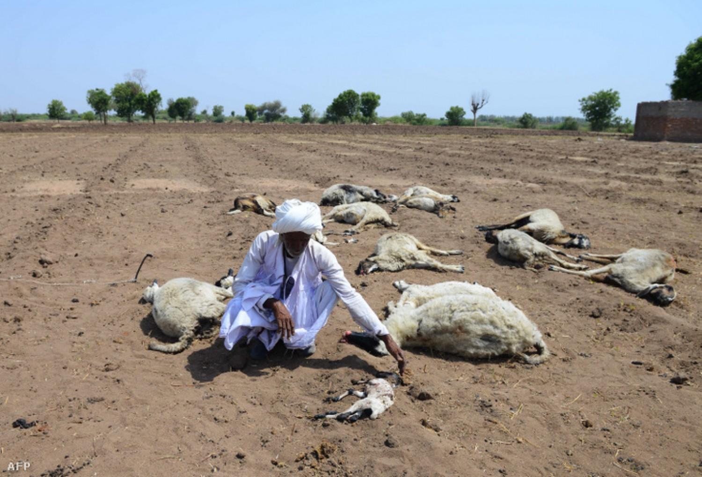 Megdöbbentő hír: Több száz indiai falu halt ki teljesen a szárazság miatt