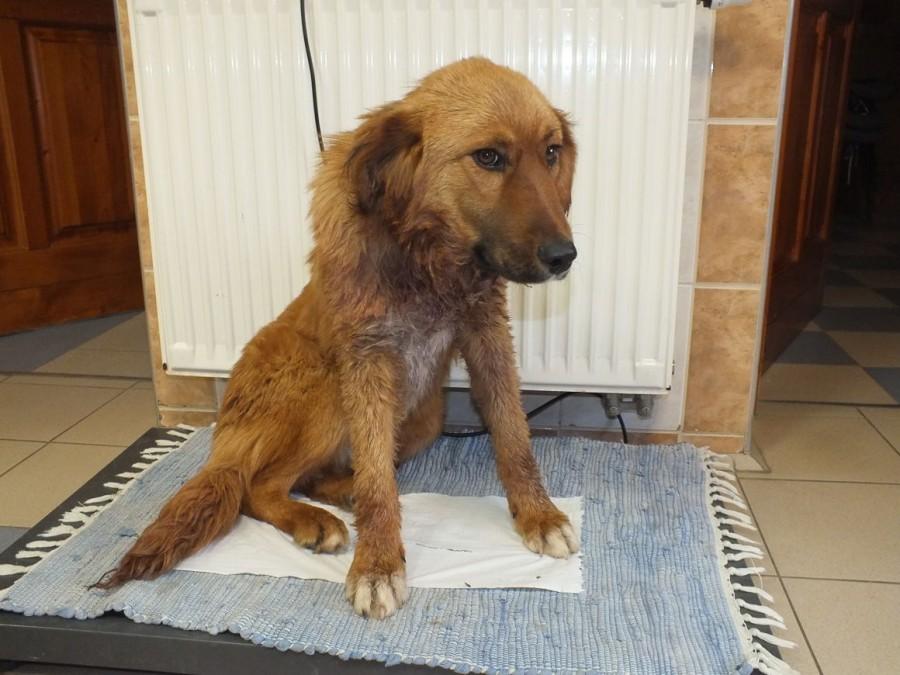 2 évet kapott a férfi, aki berúgott, majd elvágta a kutyája nyakát, mert idegesítette a láncra vert állat vonyítása! EZ MÉG NEM MINDEN!