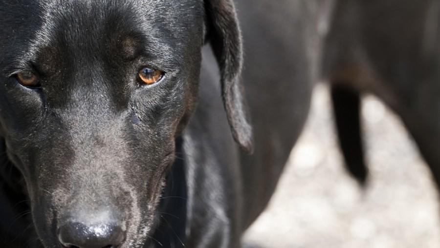 Figyelem: egyre több gazdi jelzi, hogy kutyáját megmérgezték! Megmutatjuk hol történtek az esetek