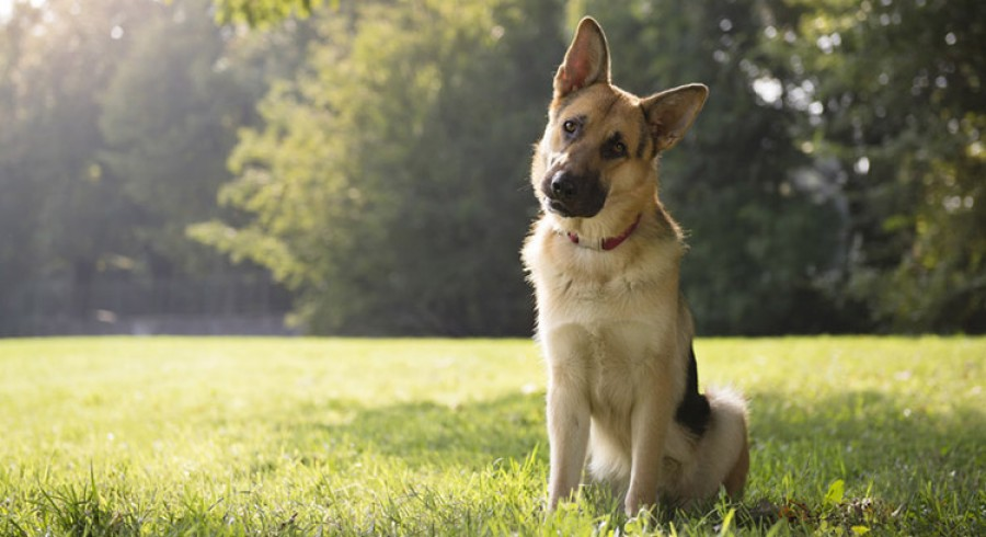 Minden nap elszökött otthonról a kutya, ezért gazdája egy nap követte őt, ám olyan felfedezést tett ami teljesen megdöbbentette