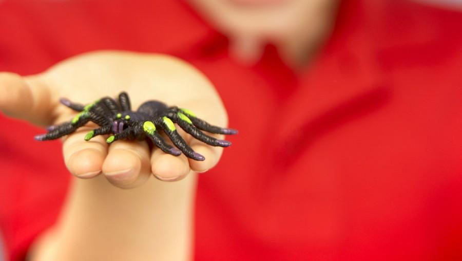 Ezzel a módszerrel örökre megszabadulhatsz a pókoktól és pókhálóktól a lakásodban