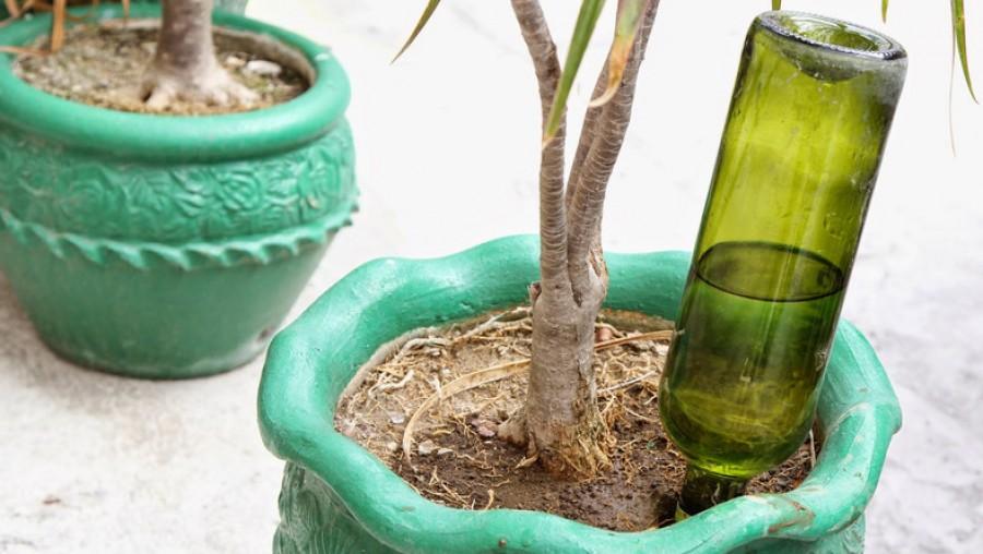 Az összes szobanövény földjébe egy borosüveget dugott. Amint megtudod miért tette, te is ki fogod próbálni