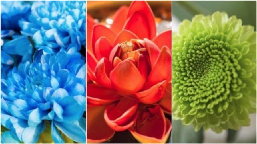 Válassz egyet a képen látható virágok közül és megtudod, ki voltál előző életben