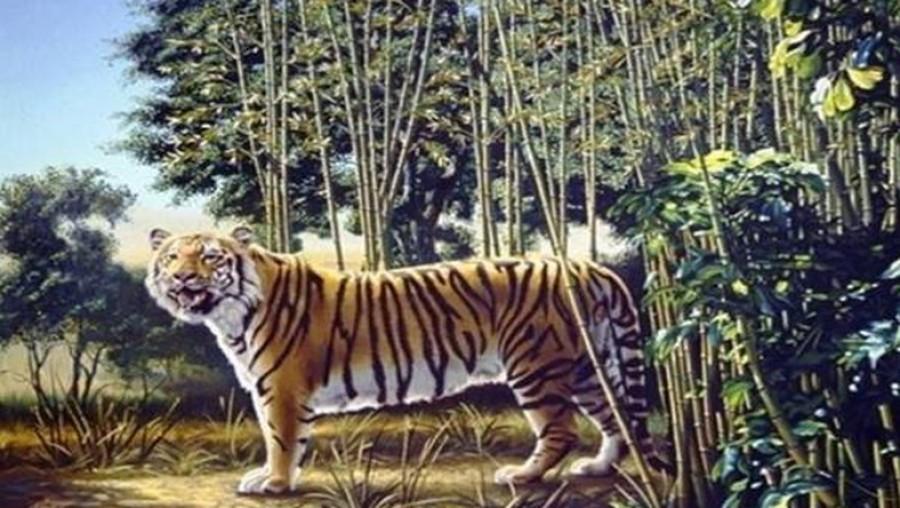 Ezt a képrejtvényt alig képes megoldani valaki. Te látod a második tigrist a képen?
