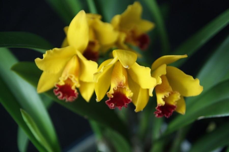 Át szeretnéd ültetni az orchideád? Így csináld, mutatjuk lépésről lépésre
