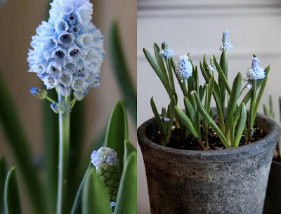 Nem is gondolnád mennyire mérgező ez a 3 virág. Mégis megtalálható a TE lakásodban is