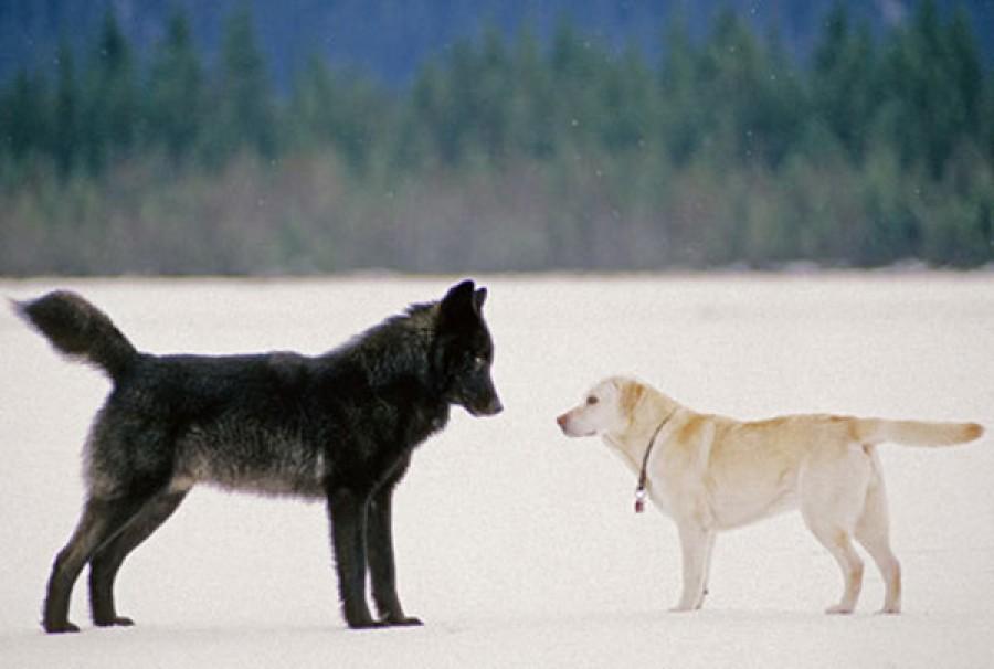 Mikor a két ismeretlen kutyái meglátták egymást, olyasmi történt, amire szinte semmi esély nem volt