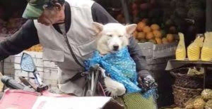 Az egész internet erről az idős bácsiról beszél aki azon gondoskodik hogy ne ázzon el kutyája!