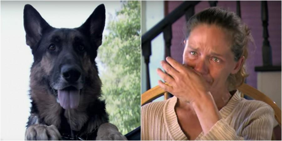 Hihetetlen: egy kóbor kutya mentette meg a balesetező nő életét!
