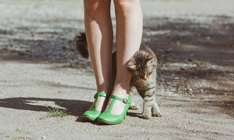 Tudtad hogy a macskák miért dörgölőznek a lábadhoz?! Az oka rendkívül érdekes, most megtudhatod miért!