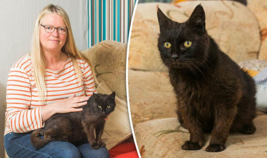Elképesztő: Több mint egy évtized után hazatért a szeretett háziállat. A gazdi nem akarta elhinni ami történt...