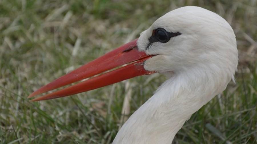 Festői fotó készült arról, ahogy a telelésre induló gólyák felsorakoztak
